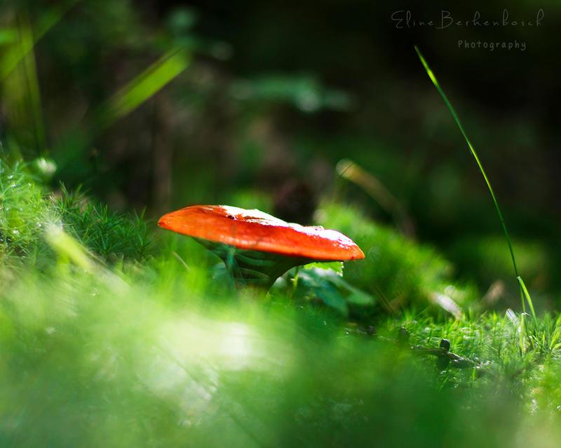 Mushroom by xOronar
