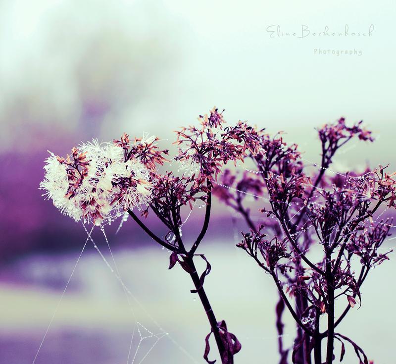 Morning Dew by xOronar