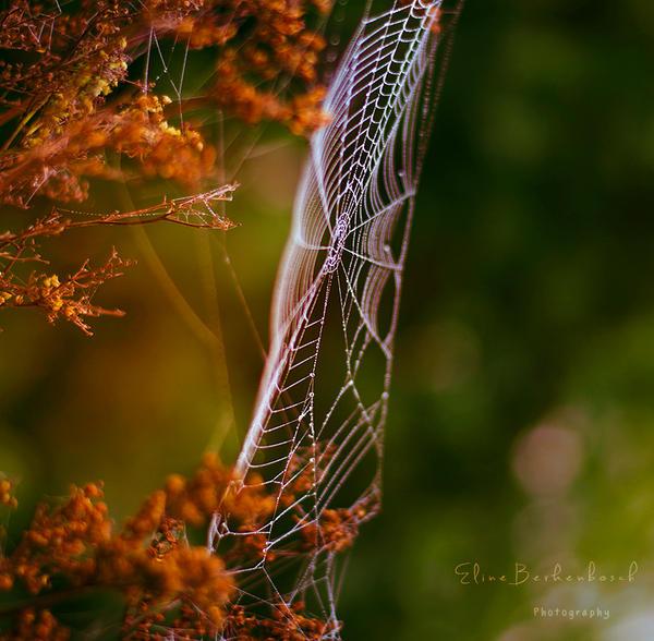 Spider Artwork by xOronar