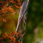 Spider Artwork