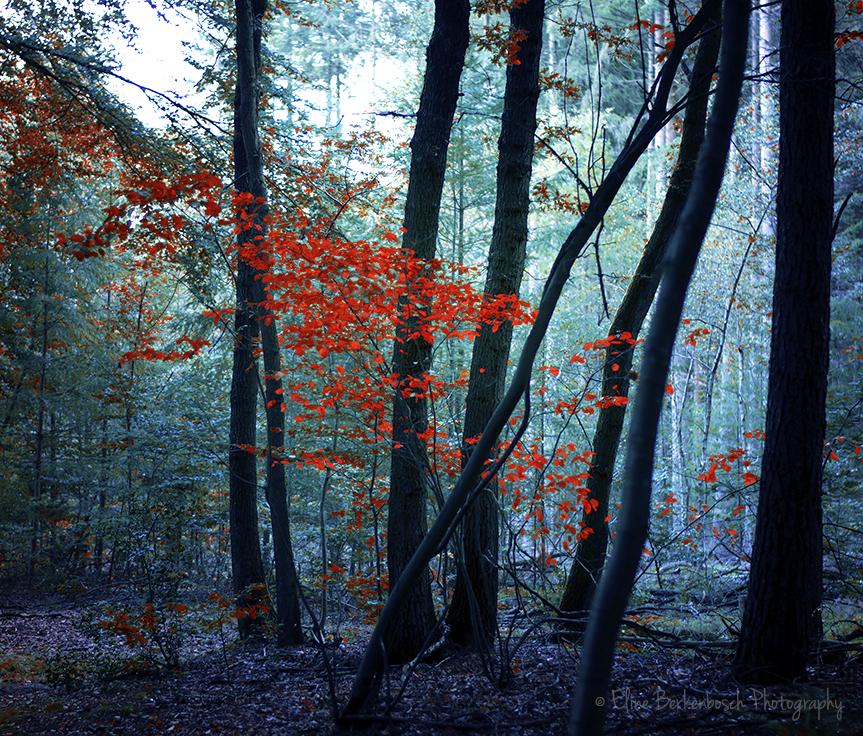 Autumn by xOronar