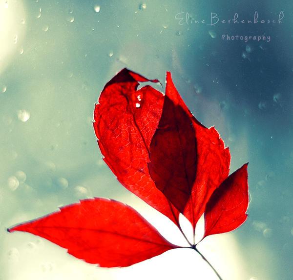 Winter tale by xOronar