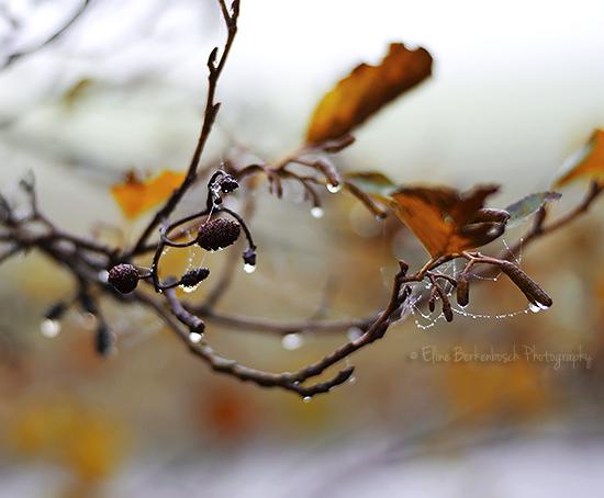 Autumn Dew by xOronar