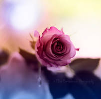 Lend me your Love by xOronar