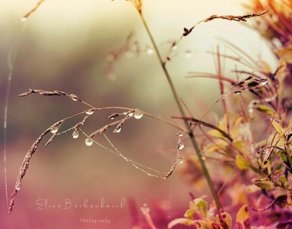 Dewdrops by xOronar