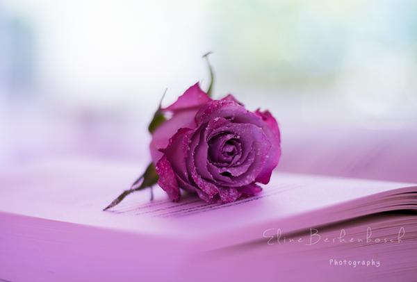 Love by xOronar