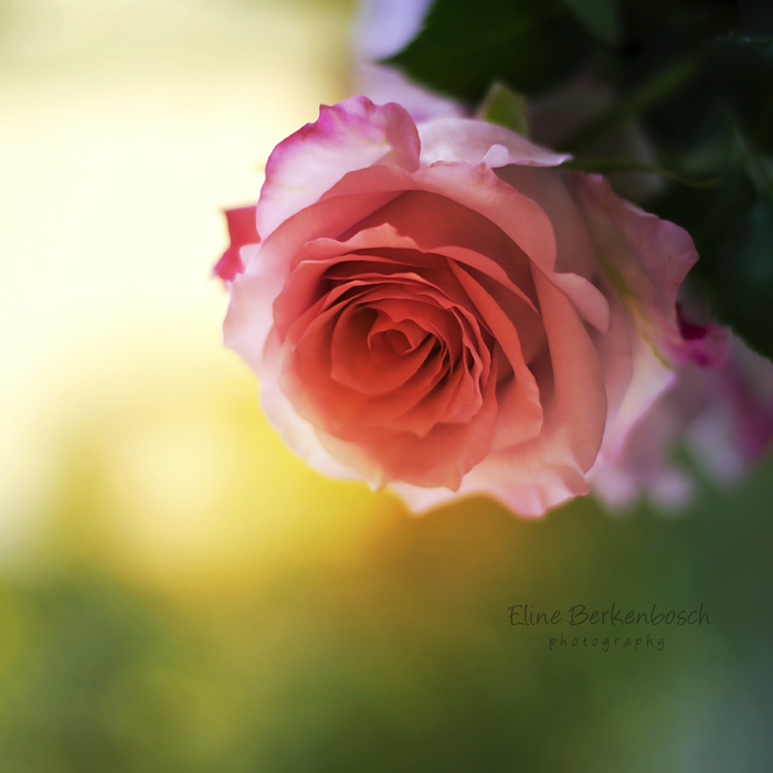 Spring time by xOronar