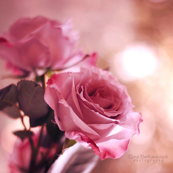 Pink by xOronar