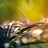 Nature's Glow by xOronar