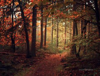 Walk with me by xOronar
