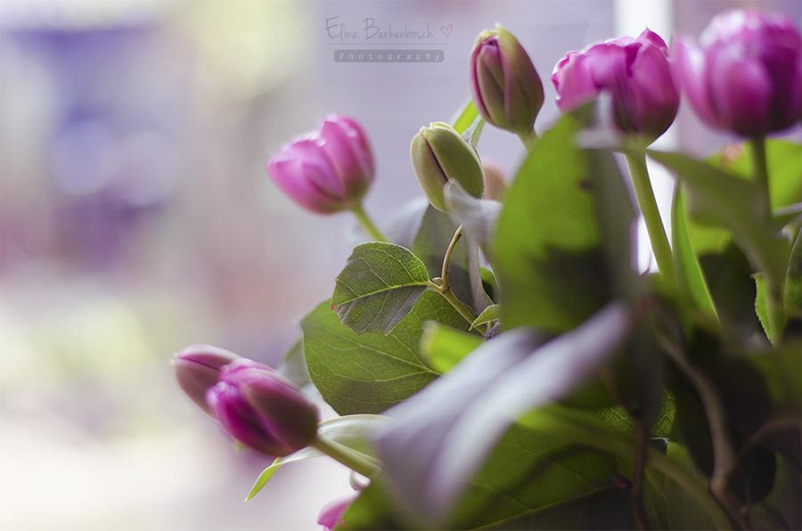 Spring tulips by xOronar