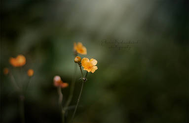 Alone in the dark by xOronar