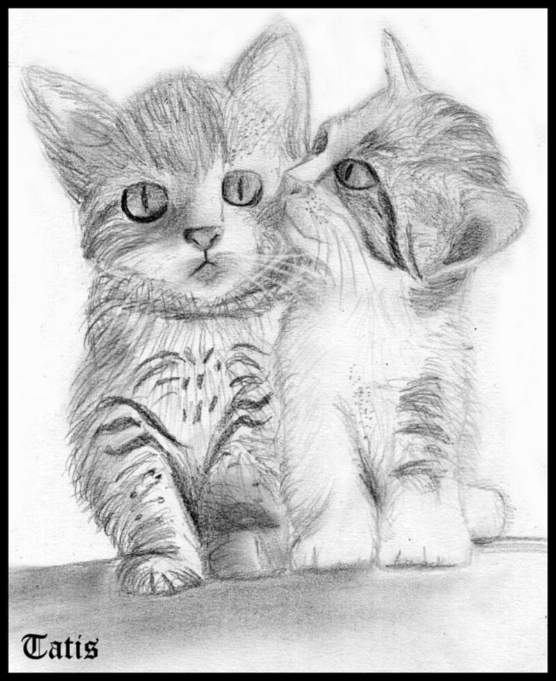 Gatos tiernos para dibujar a lapiz , Imagui