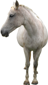 White Horse PNG