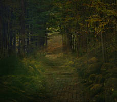Forest Premade Background