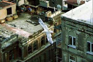 Istanbul Beneath My Wings by emreekinci