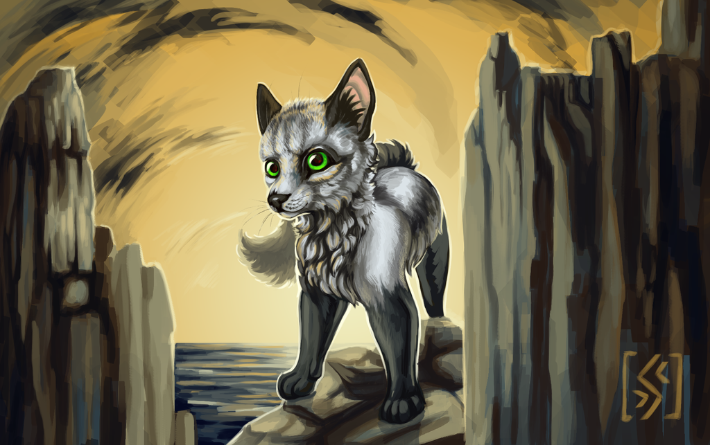 Cat and rocks by Surover