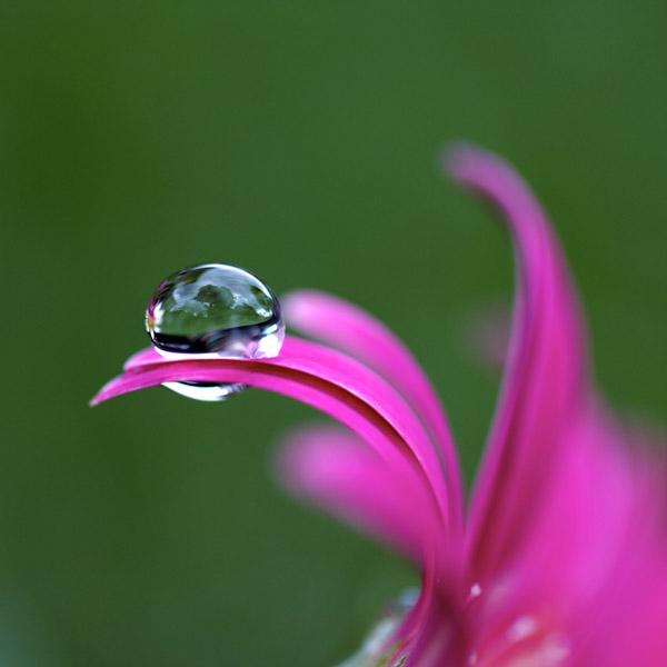droplet1 by AJLockland