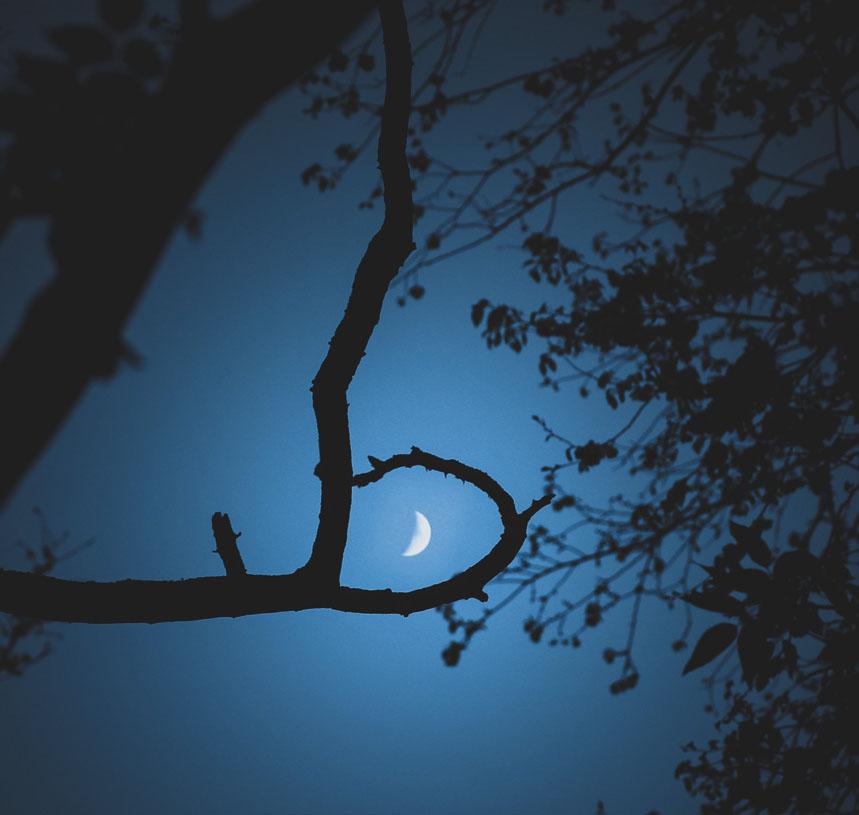Luna And Tree by AMMozart
