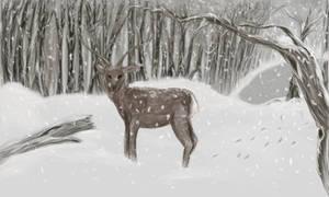 Sika deer in the snow