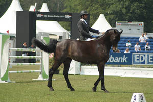 sport horse removed tack by suuslovertje