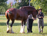 commission: removed tack clydesdale