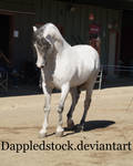 removed tack andalusian