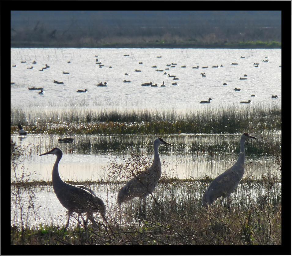 Wetlands by bensinn