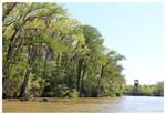 Swamp and Bridge by bensinn
