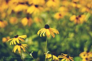 Yellow Flowers by Dark-Slytherin