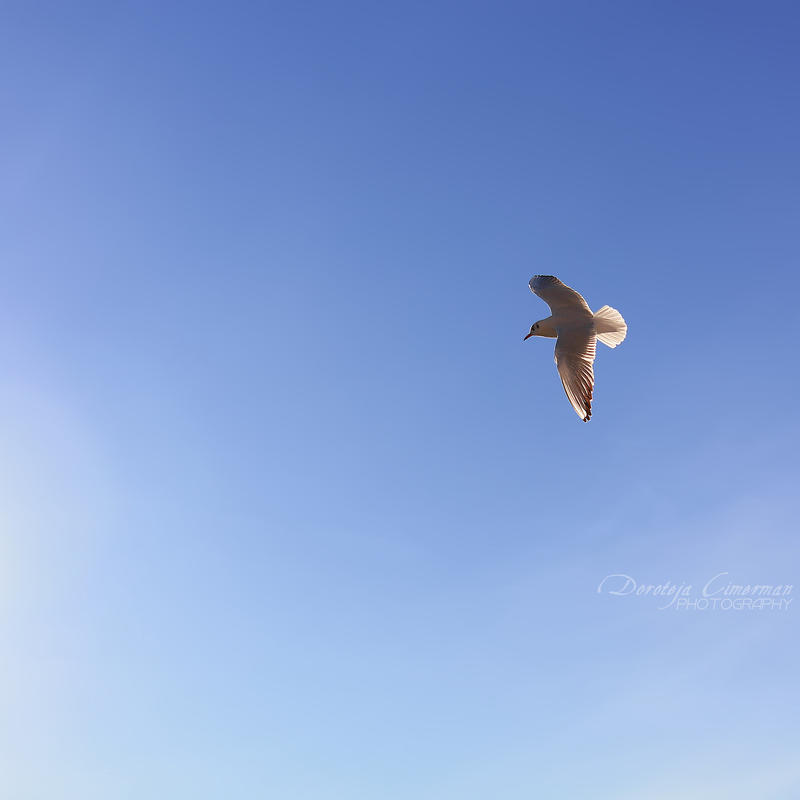Fly Away by DorotejaC