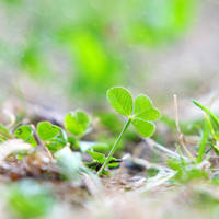 Create your own Luck by DorotejaC