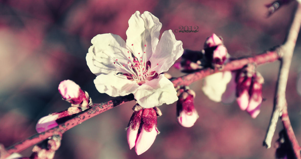 peaches by nari-me