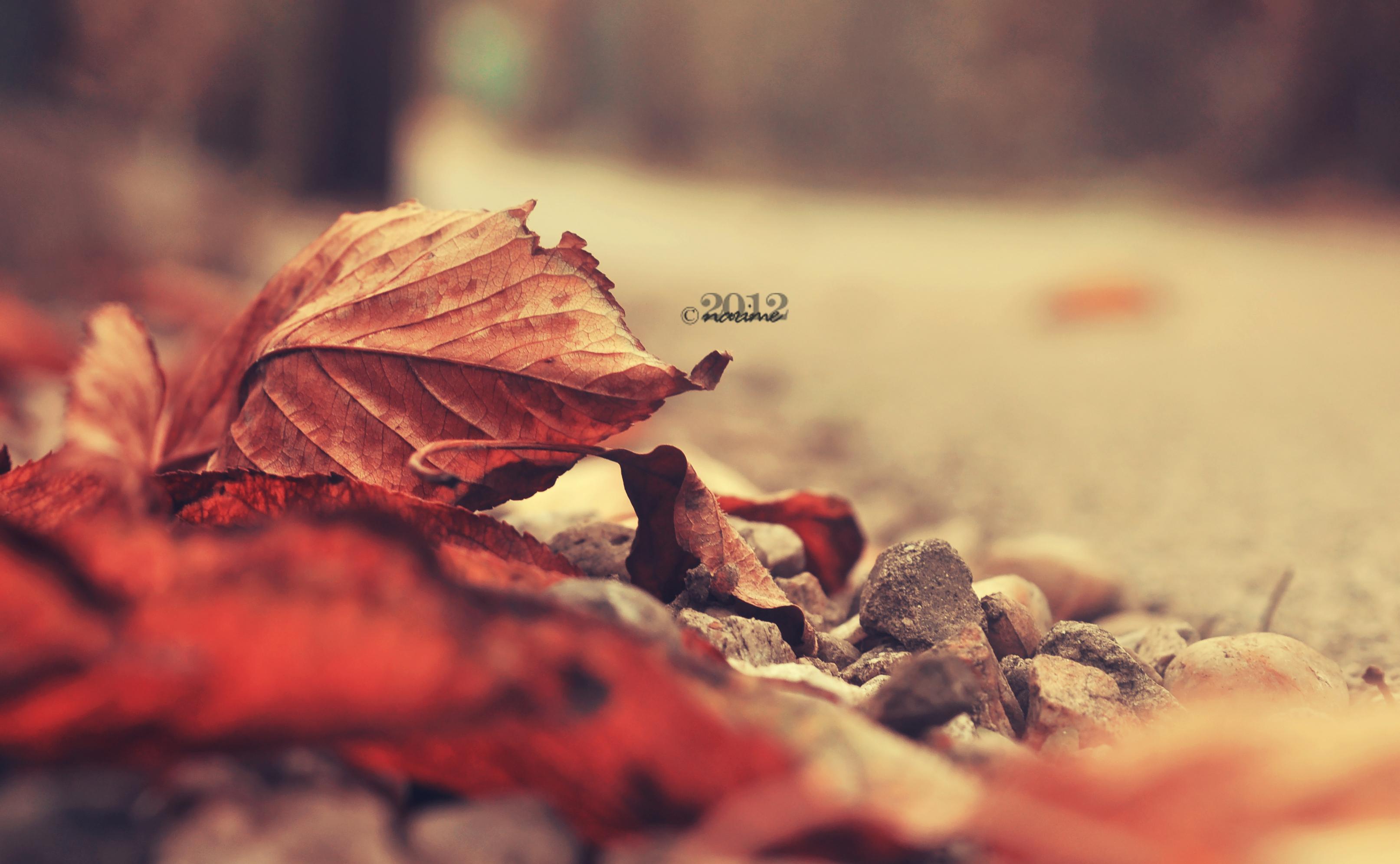 Fallen Leaves by nari-me