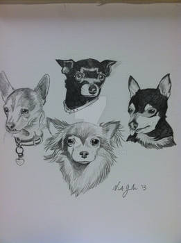 Chihuahua Commission!