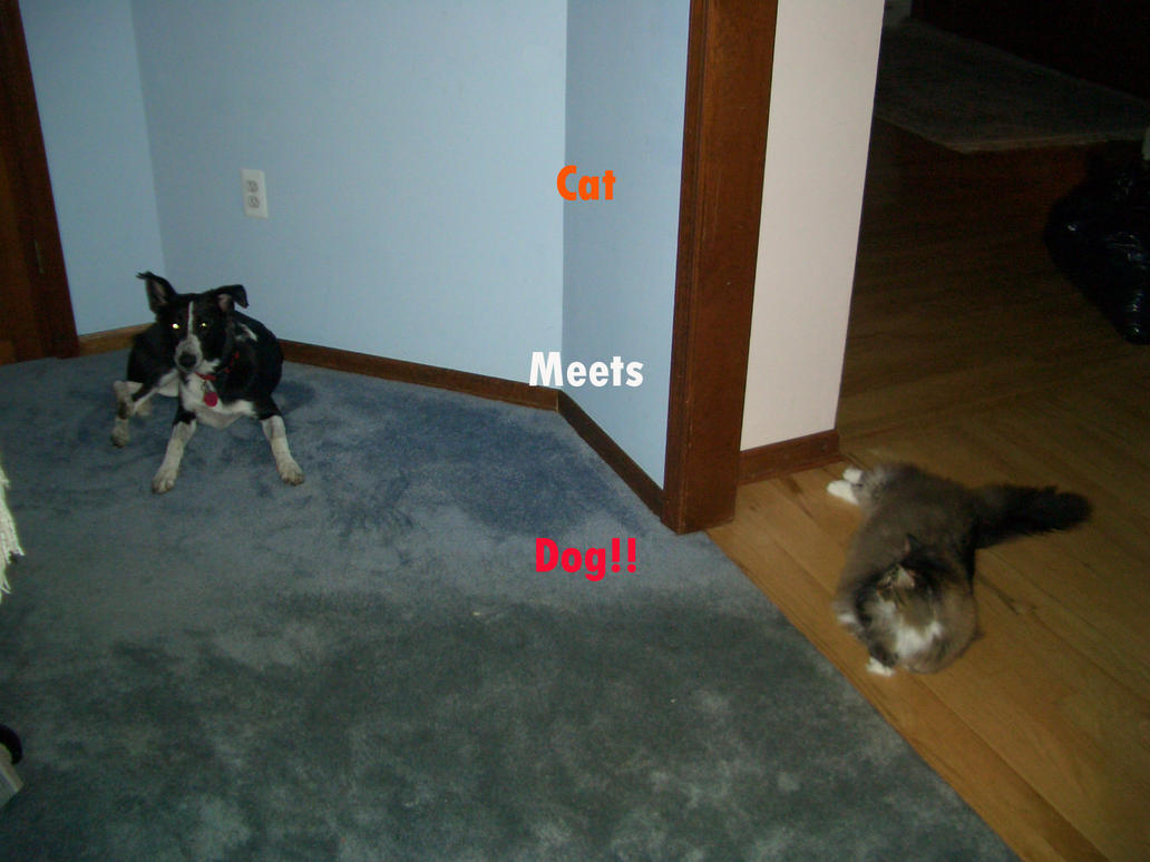 Help My Dog Chases My Cat