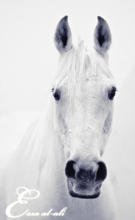 White horse ... by Fares4uae