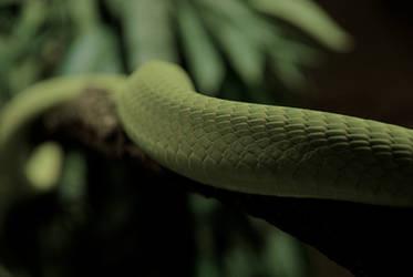 Green Mamba by sistro-80