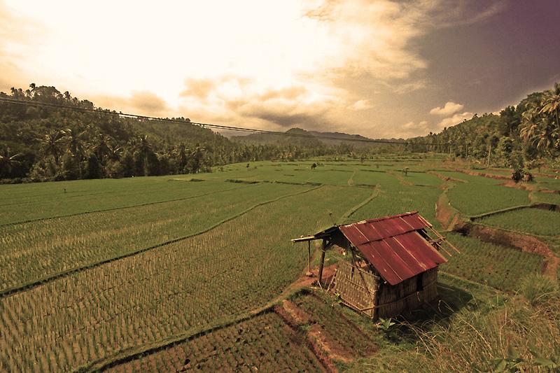 rice terraces bali 2 by worldpitou