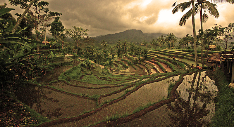 rice terraces bali 12 by worldpitou