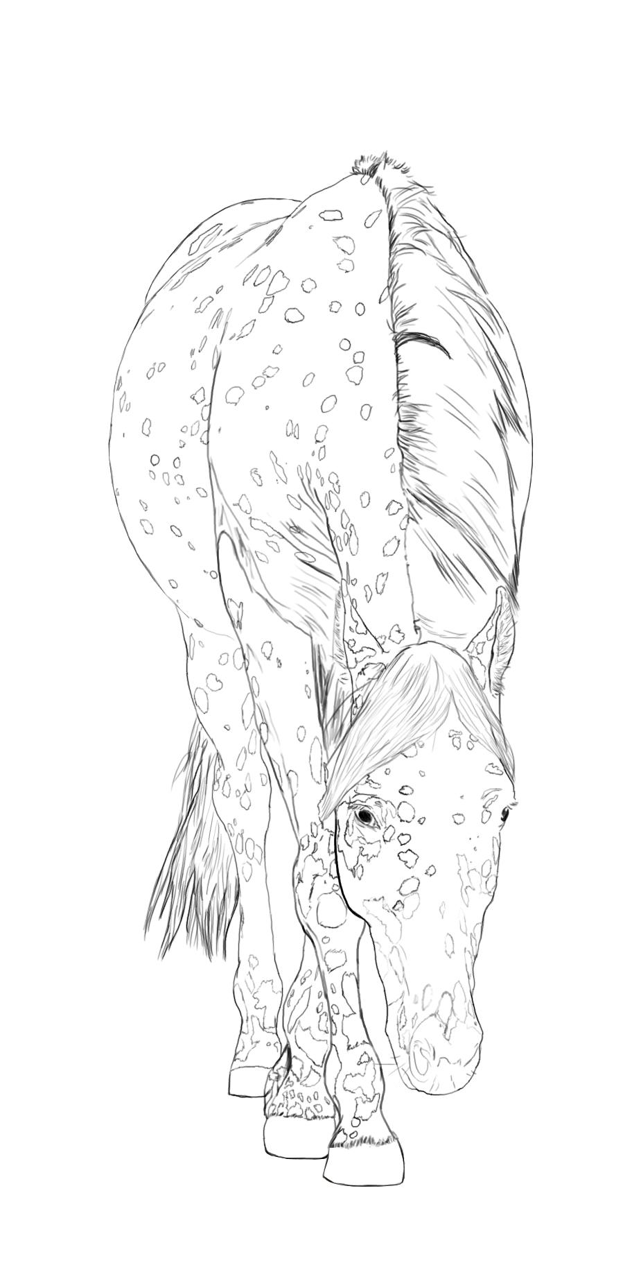Appaloosa horse line art by StormsDestiny
