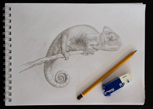Chameleon pencil drawing