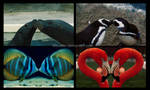 Love animal by filbuster