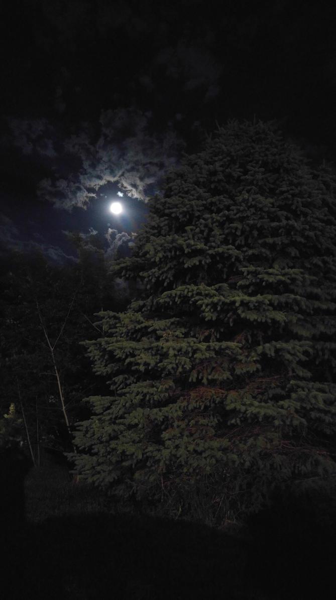 Moon and Tree by SeriahAzkath