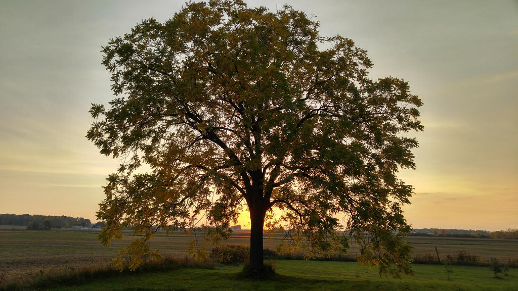 Fall Sunset 2016