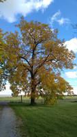 Lone Fall Tree by SeriahAzkath
