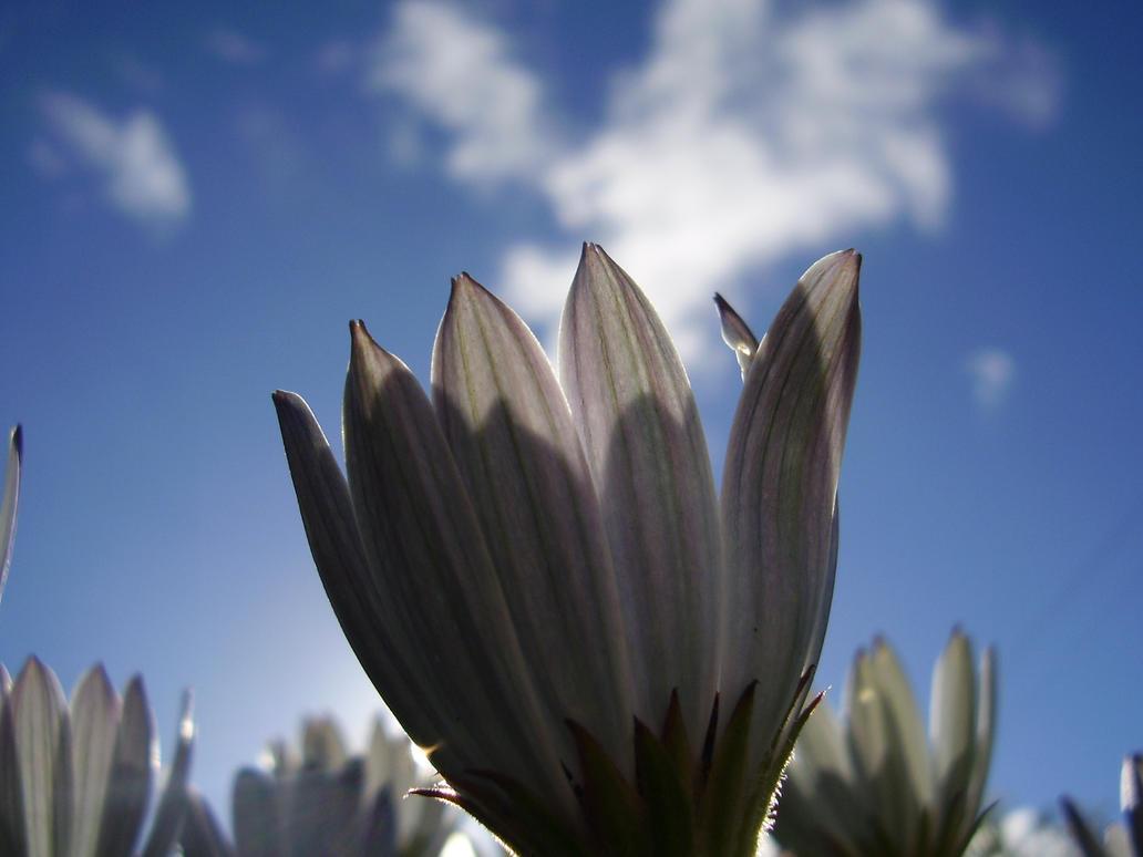 White hope by rendereddream