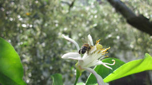 A bee in its nature 1