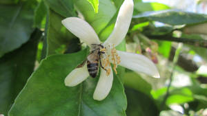 A bee in its nature 2