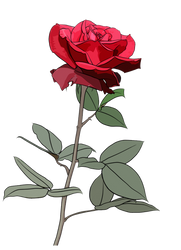 Rose png by kanall